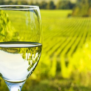 Wineglass overlooking Vineyard