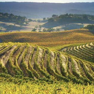 A Golden Age for Sauvignon Blanc